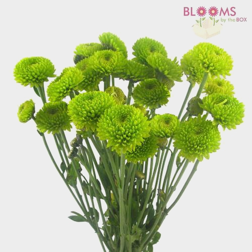 Pompon Button Green Flowers