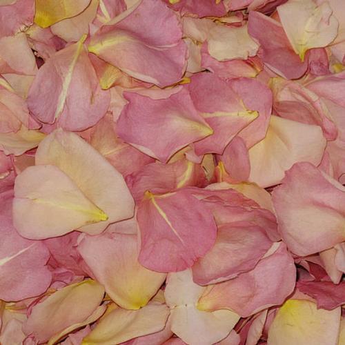 Sumptuous Romance Fd Rose Petals (30 Cups)