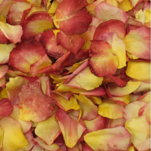 Chihuly Yellow / Red Blend Rose Petals (30 Cups)