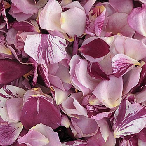 Passionate Kisses Fd Rose Petals (30 Cups)