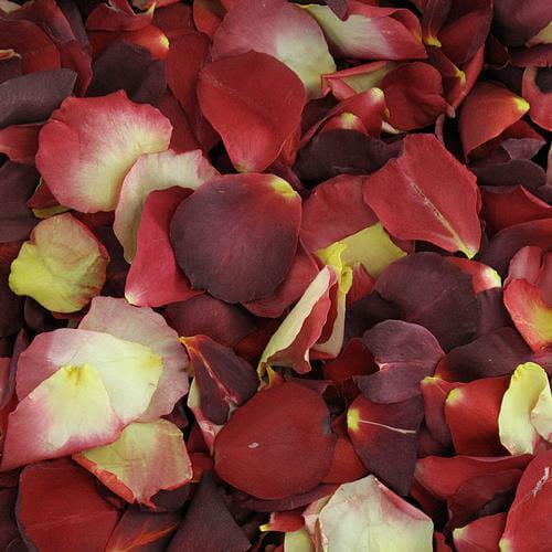 Celebrity Red Blend Rose Petals (30 Cups)