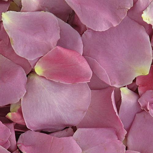 Bewitched Lavender FD Rose Petals (30 Cups)