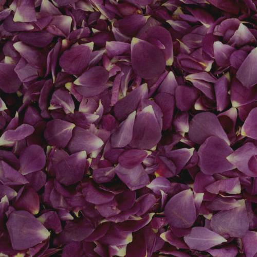 Ebb Tide Fd Rose Petals (30 Cups)