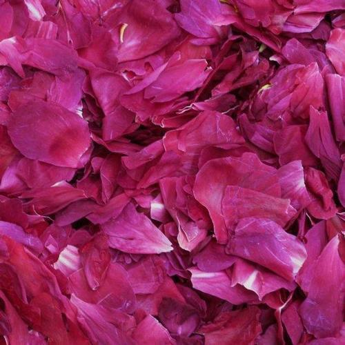 Dark Fuchsia Fd Peony Petals (30 Cups)