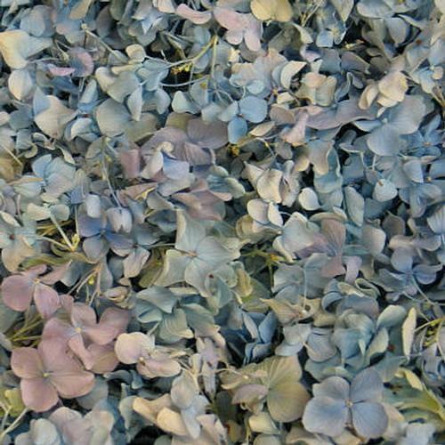 Blue FD Hydrangea Petals (30 Cups)