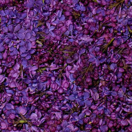 Deep Purple FD Lilac Petals (30 Cups)