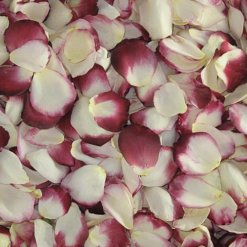 Blushing Bride Rose Petals (30 Cups)