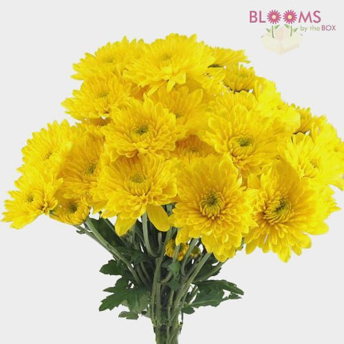 Cushion Pompon Yellow Flowers