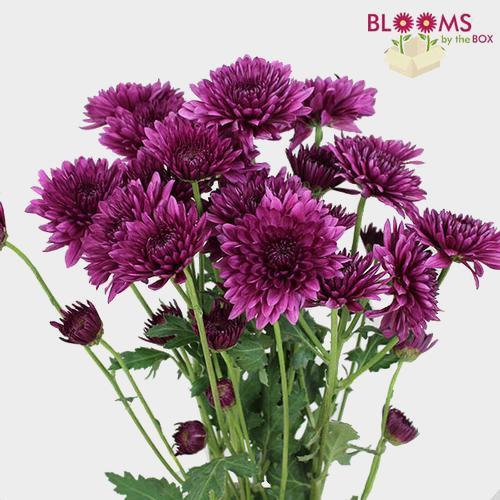 Cushion Pompon Purple Flowers