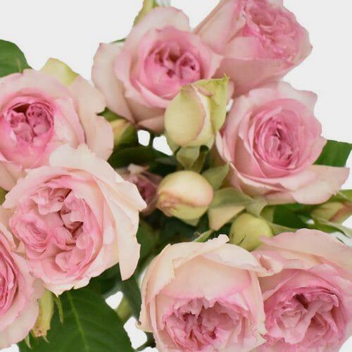 Spray Garden Rose Pink