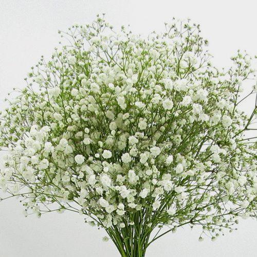 Whole Foods Florist Wedding: Gypsophila Excellence Flowers