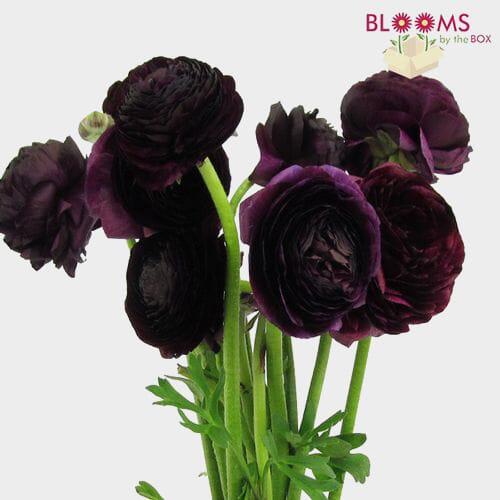 1bff3c59912 Purple Ranunculus Flower