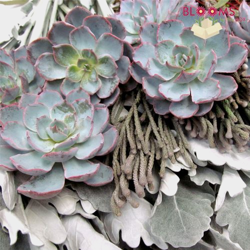 Elegant Succulents & Silver DIY Flower Pack