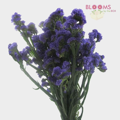 Purple Filler Flowers Bulk Pack