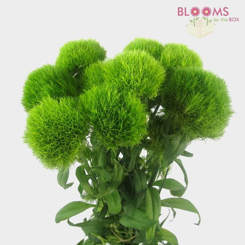 Green Filler Flowers Bulk Pack
