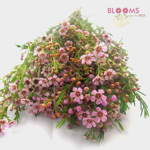 Pink Filler Flowers Bulk Pack