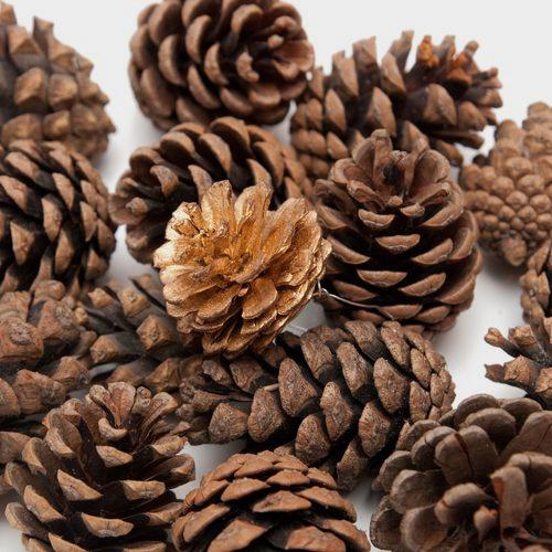 Pine Cones Large (bag/25)