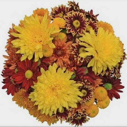 Mixed Bouquet 12 Stem - Harvest Time