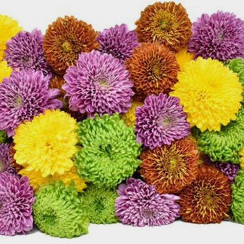 Mum Ball Assorted Flowers Bulk