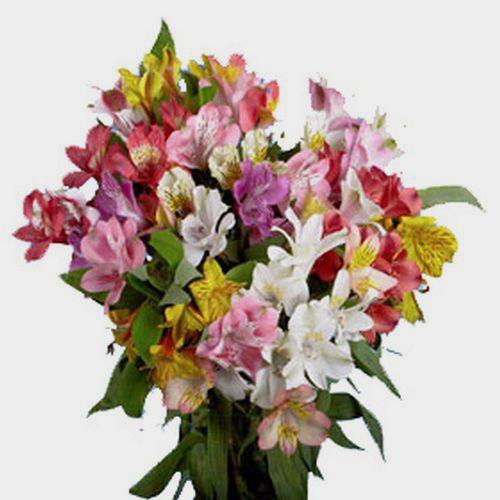 Alstroemeria Super Select Assorted Bulk