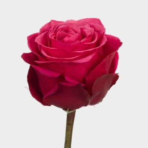 Rose Cherry O 40cm