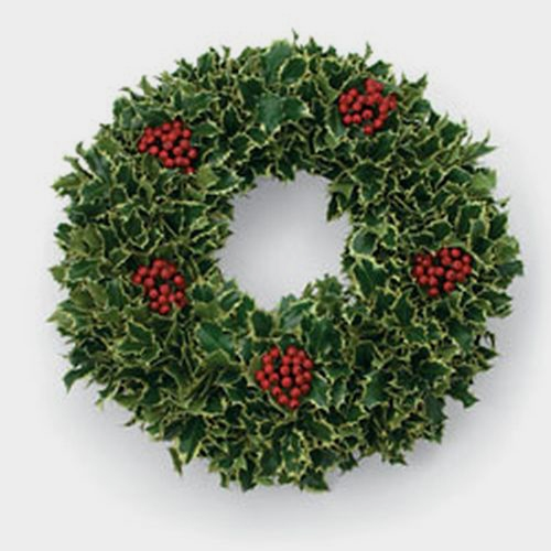 Variegated Holly Wreath 14