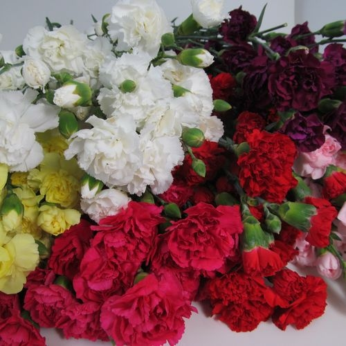Mini Carnations Assorted Fancy