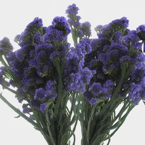 Purple Statice Flowers Bulk