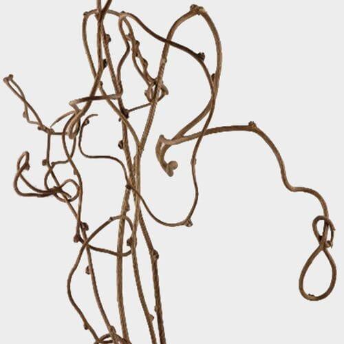 Kiwi Vine Bulk