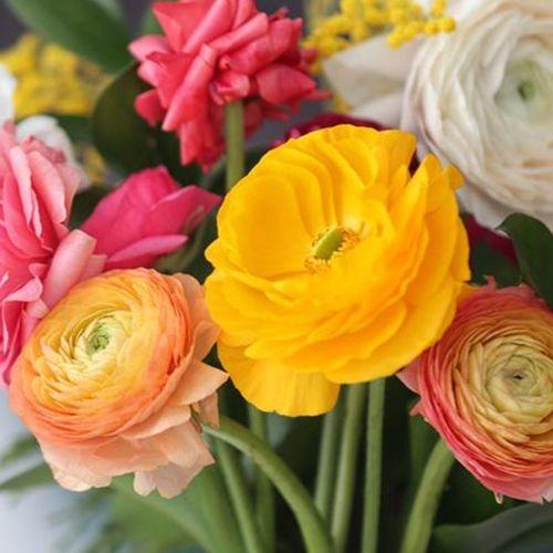 Ranunculus Assorted Colors bulk