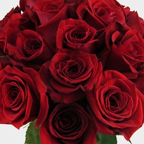Red Rose Freedom 70cm Bulk