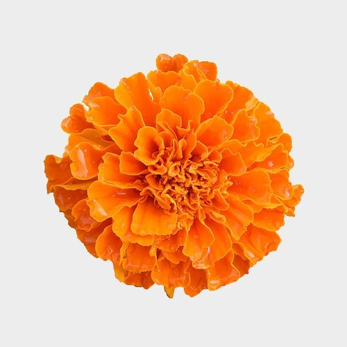 Orange Marigold Flowers - Bulk