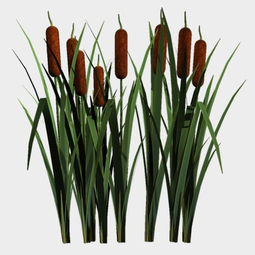 Cattails - Bulk
