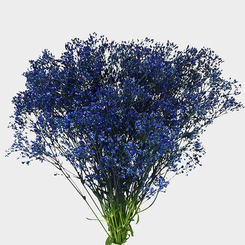 Gypsophila - Tinted Blue Bulk