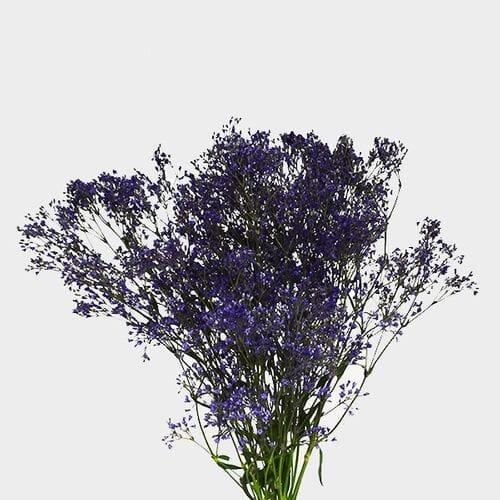 Gypsophila - Tinted Purple Bulk